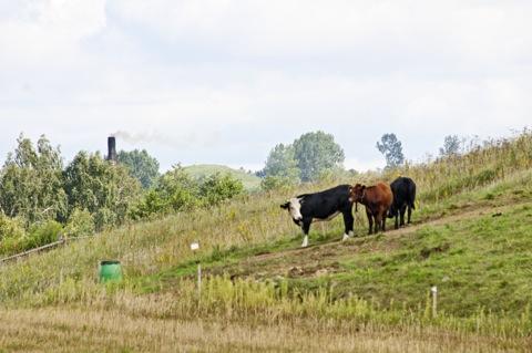 Bild: In der Gegend um Filipow zwischen Suwalki und Mragowo. Die ländlich geprägte Gegend entspricht am Ehesten dem, was wir uns Ostpreußen vorstellen.