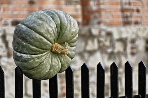Bild: Herbstzeit ist Kürbiszeit - An der Stadtmauer von Riga in der Torņa iela.