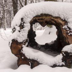 Bild: Verfaulter Baumstamm als dekoratives Element im Park von Kadriorg.