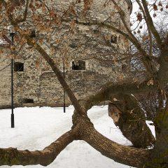 "Bild: Sie Kanonenbastion ""Dicke Margarethe"" in Tallinn."