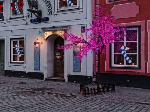 Bild: Lustig finde ich, dass in der Altstadt von Riga zur Weihnachtszeit fast alle Bäume - auch Laubbäume - durch das behängen mit Lichterketten zu Weihnachtsbäumen umfunktioniert werden. OLYMPUS OM-D E-M5 und M.Zuiko Digital 12-50mm 1:3.5-6.3 EZ.
