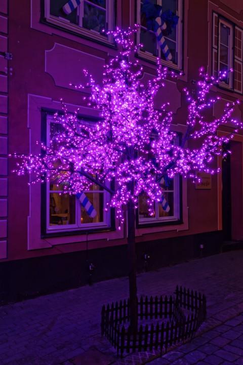 Bild: In Riga werden selbst Laubbäume weihnachtlich geschmückt. Abends verbreiten die bunten Lichterketten eine schöne Stimmung. NIKON D700 mit AF-S NIKKOR 24-120 mm 1:4G ED VR. ISO 1600 ¦ f/7,1 ¦ 30 mm ¦ 1/40 s ¦ kein Blitz. Klicken Sie auf das Bild um es zu vergrößern.