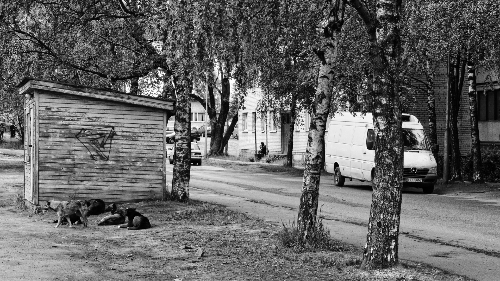 Bild: Die Hunde von Riga. Frühmorgens im Stadtteil Daugavgrīva. OLYMPUS OM-D E-M5 mit M.ZUIKO DIGITAL ED 12‑40mm 1:2.8. ISO 640 ¦ f/7,1 ¦ 40 mm ¦ 1/320 s ¦ kein Blitz. Klicken Sie auf das Bild um es zu vergrößern.
