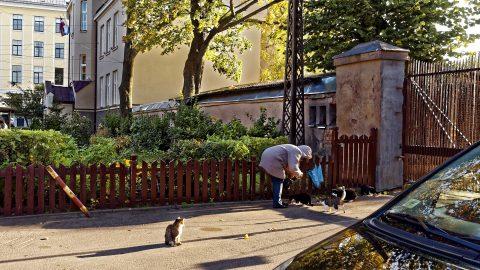 Bild: Futter für herrenlose Katzen in der Nähe des Zentralmarktes von Rīga. OLYMPUS OM-D E-M5 mit M.ZUIKO DIGITAL ED 12‑40mm 1:2.8. ISO 200 ¦ f/2,8 ¦ 15 mm ¦ 1/400 s ¦ kein Blitz ¦ 8 Einzelbilder. Klicken Sie auf das Bild um es zu vergrößern.
