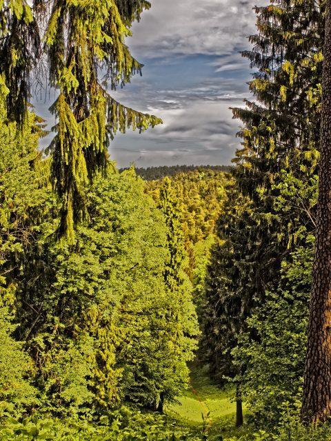 Bild: Im Waldgebiet der Sapiegine östlich von Vilnius hat man zuweilen das Gefühl in einem Mittelgebirge unterwegs zu sein. OLYMPUS OM-D E-M1 mit M.ZUIKO DIGITAL ED 12‑40mm 1:2.8 ISO 200 ¦ f/9 ¦ 25 mm ¦ 1/200 s ¦ kein Blitz. Klicken Sie auf das Bild um es zu vergrößern.