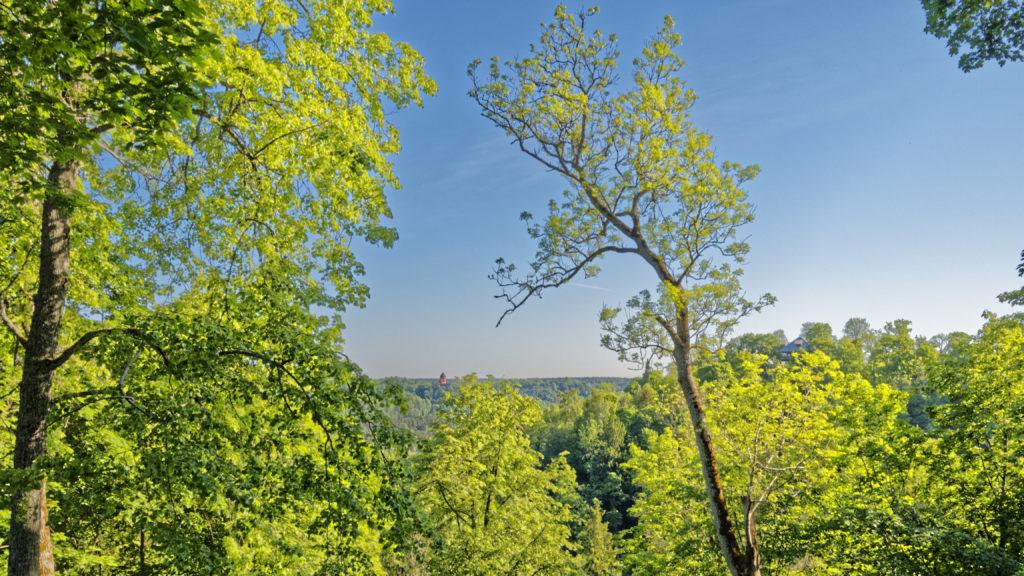 Bild: Blick von Sigulda über das bewaldete Tal der Gauja auf die restaurierte Burg Turaida. Hier liegt auch der der Nationalpark Gauja. OLYMPUS OM-D E-M1 Mark I und LEICA DG SUMMILUX 15 mm / F1.7 ASPH. ISO 200 ¦ f/9.0 ¦ 15 mm ¦ 1/60 s ¦ kein Blitz Klicken Sie auf das Bild um es zu vergrößern.