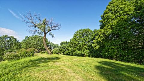 Bild: Ein Morgenspaziergang in Rīga im Dzegužkalna Park.. Diese Szene erinnert ein wenig an Modest Mussorgski - nur das eben keine Nacht ist. Abgestorbener Baum auf der Norddüne des Dzegužkalna Park. OLYMPUS OM-D E-M1 Mark II und M.ZUIKO DIGITAL ED 7‑14mm 1:2.8 PRO. ISO 200 ¦ f/5.6 ¦ 7 mm ¦ 1/1500 s ¦ kein Blitz. Klicken Sie auf das Bild um es zu vergrößern.