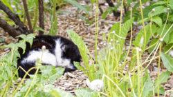 Bild: Schlafende junge Katze am Livenplatz in der Altstadt von Rīga. OLYMPUS OM-D E-M5 mit M.ZUIKO DIGITAL ED 12‑40mm 1:2.8. ISO 200 ¦ f/2.8 ¦ 40 mm ¦ 1/60 s ¦ kein Blitz. Klicken Sie auf das Bild um es zu vergrößern.