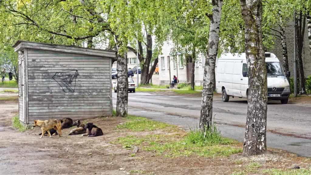Bild: Ein echtes Problem der Vororte von Rīga stellen die wilden Hunde dar, die sich kleinen Rudeln zusammengerottet haben. Auf dem Markt im Stadtteil Daugavgrīva von Rīga. OLYMPUS OM-D E-M5 mit M.ZUIKO DIGITAL ED 12‑40mm 1:2.8. ISO 640 ¦ f/7,1 ¦ 40 mm ¦ 1/320 s ¦ kein Blitz. Klicken Sie auf das Bild um es zu vergrößern.
