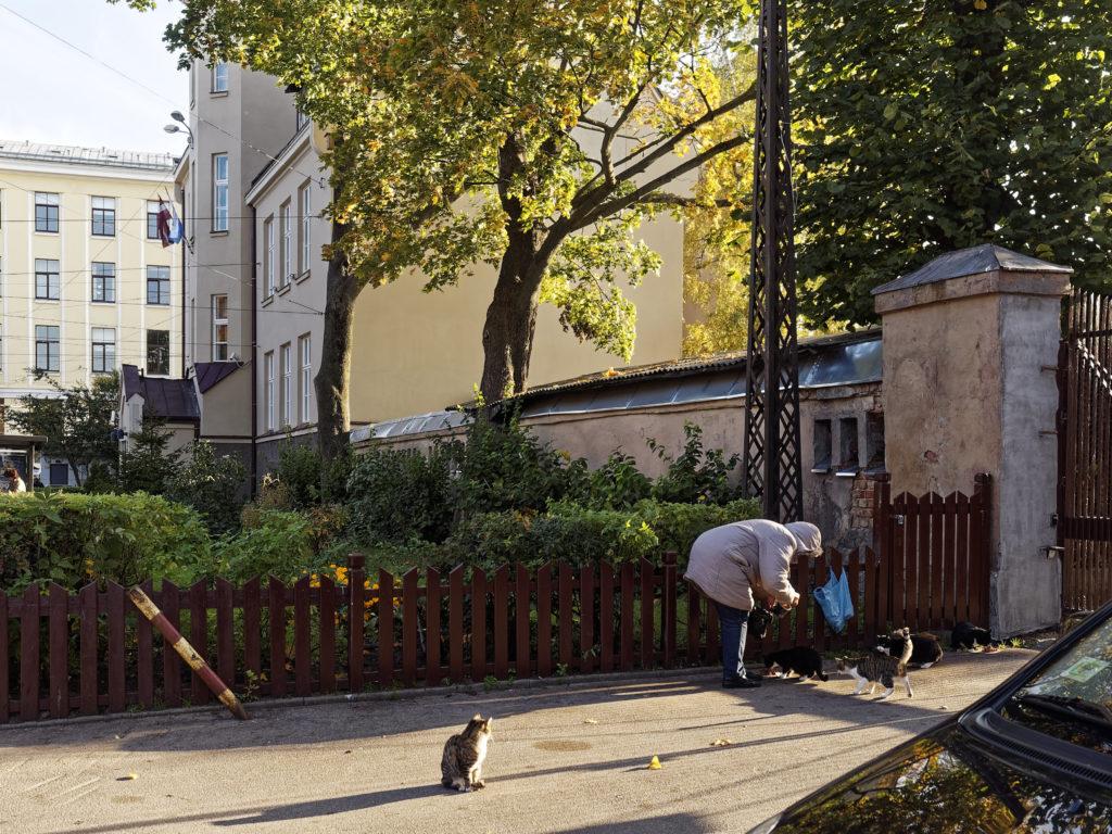 Bild: Auf dem Außengeländes des Zentralmarktes von Rīga. Jeder in Rīga mag Katzen und behandelt diese gut. Anfang Oktober 2014. OLYMPUS OM-D E-M5 mit M.ZUIKO DIGITAL ED 12‑40mm 1:2.8 PRO Klicken Sie auf das Bild, um es zu vergrößern.